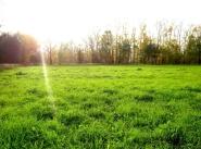 Коттеджный поселок Зелёная аллея